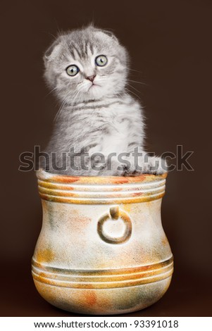 Little kitty in a bowl on brown background - stock photo