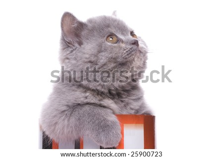 little kitty in the box on a white background - stock photo
