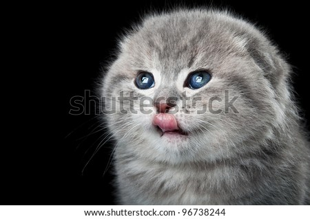 little kitty licked isolated on a white background - stock photo