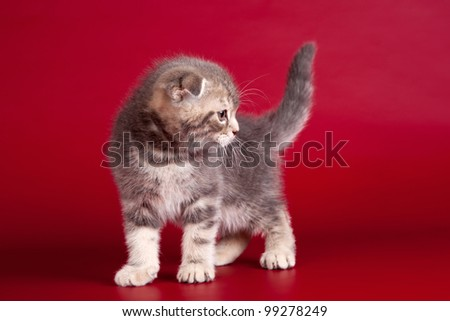 Little kitty on red background