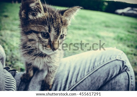 Little kitty on women's leg with the grass in background spotted something interesting . Toned image