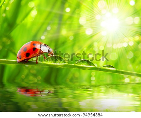 Little ladybug drinking fresh morning dew on a spring grass. Sunny day concept. Close up with shallow DOF. - stock photo