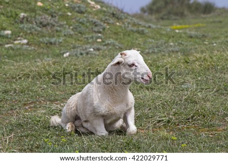 Little lamb sitting on green meadow - stock photo