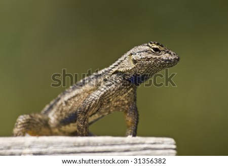 little lizard lounging in the sun against a blurred background