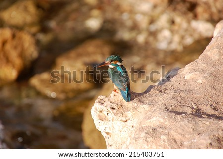 Little lovely bird kingfisher. - stock photo