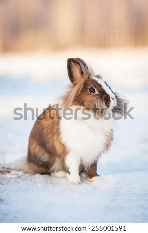 Little miniature rabbit sitting outdoors in winter - stock photo