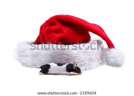 Little mouse and Santa hat
