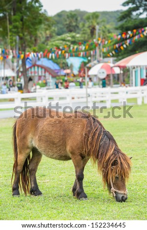 Little nag horse eating grass on field in farm - stock photo