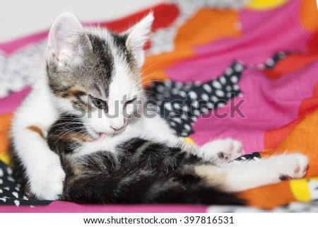 Little new born cat on a bed - stock photo