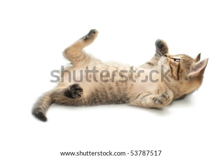 Little one-month striped kitten in playing - stock photo