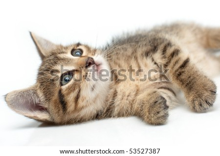 Little one-month striped kitten lying and looking up - stock photo
