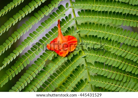 Little orange flower on green leaf backgrond,select focus with shallow depth of field:ideal use for background - stock photo