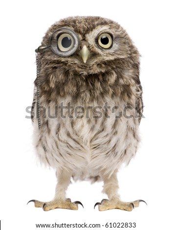 Little Owl wearing magnifying glass, 50 days old, Athene noctua, standing in front of a white background - stock photo