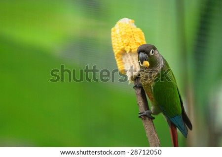 little parrot - stock photo