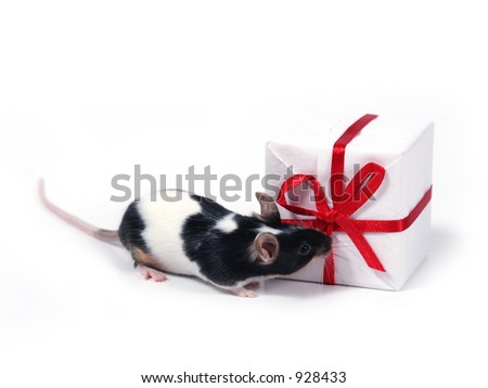 little pet with present
