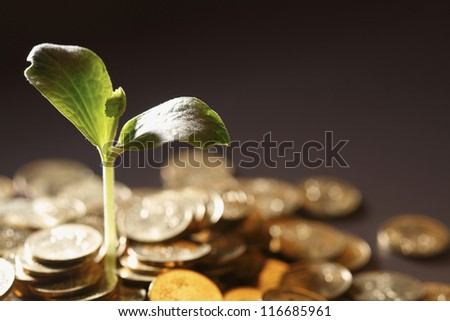 Little plant growing out of pile of coins - stock photo