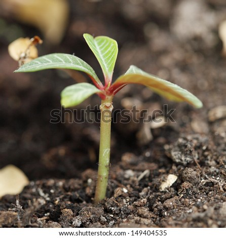 little plant is planted in the ground - stock photo
