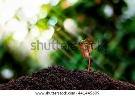 little plant seedling growing on fertile soil . - stock photo