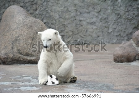 Little polar bear with soccer ball - stock photo