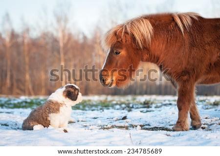 Little pony and saint bernard puppy - stock photo