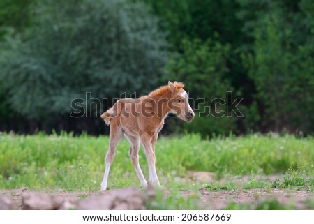 Little pony filly - stock photo