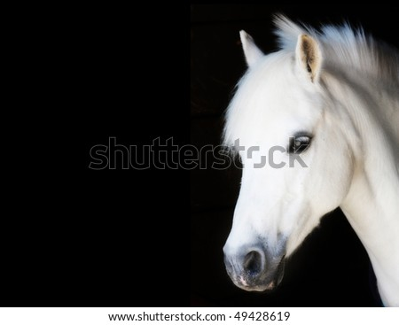 little pony prince isolated on black - stock photo