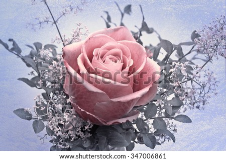 little posy with rose flower, sweet cleaver and blueberry leaves, monochrome with snowy texture - stock photo
