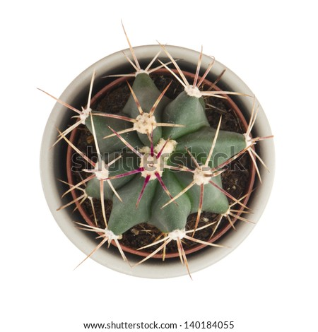 Little prickly cactus in a flower pot isolated on a white background. - stock photo