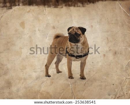 Walker Coon Dogs Logo for Pinterest