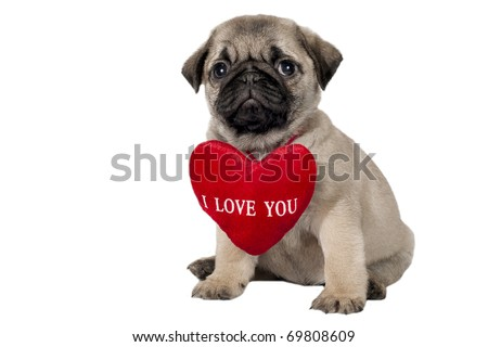 """Little pug puppy with sign """"I Love You"""". - stock photo"""
