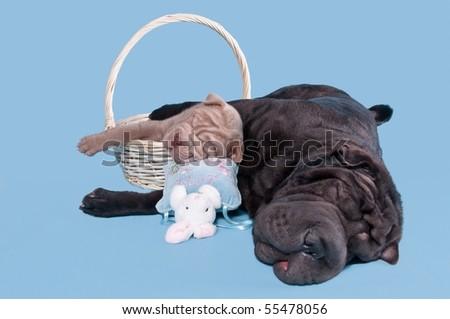 little puppy asleep in a basket with its big bullmastiff friend - stock photo