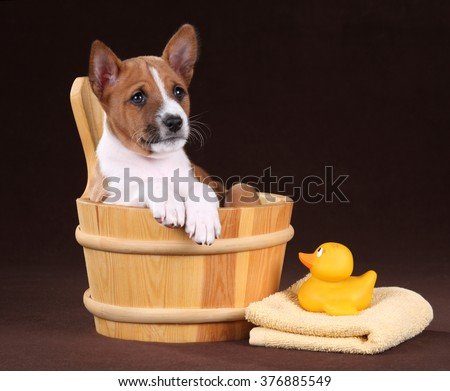 Little puppy dogs in a wooden tub