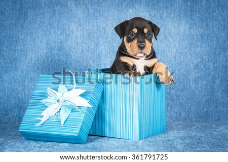 Little puppy sitting in a gift box