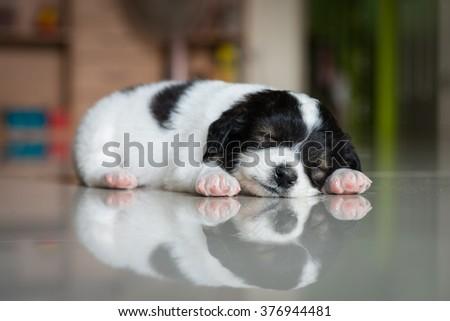 little puppy sleeping on the tile - stock photo