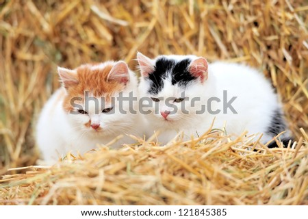 Little pussy cat on a straw - stock photo