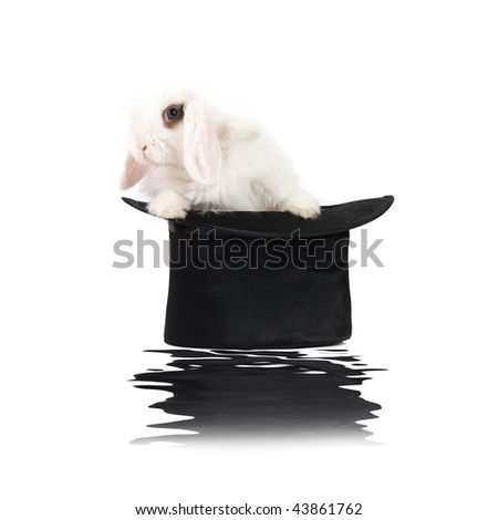 Little rabbit at black hat with reflection isolated on a white background
