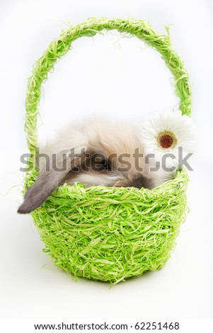 Little rabbit in a green basket with a flower - stock photo