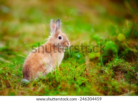 little rabbit in the grass