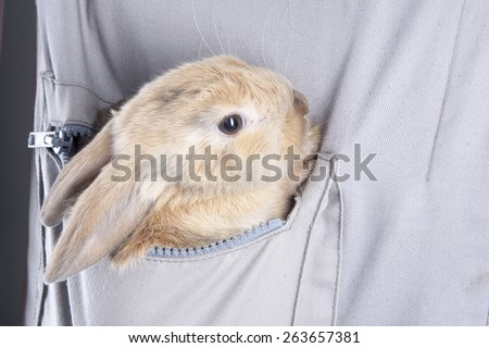 Little rabbit in your pocket - stock photo