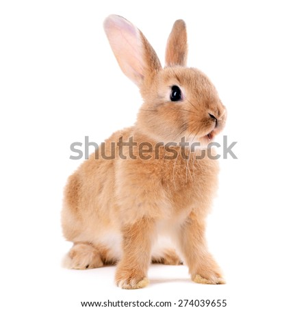 Little rabbit isolated on white - stock photo