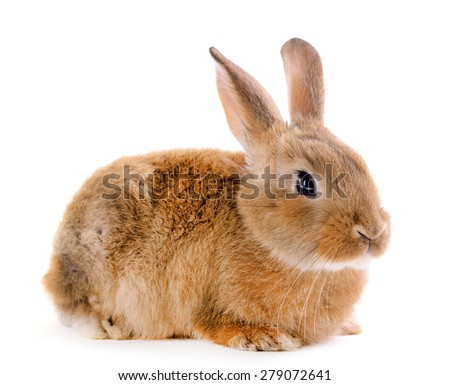 Little rabbit isolated on white - stock photo