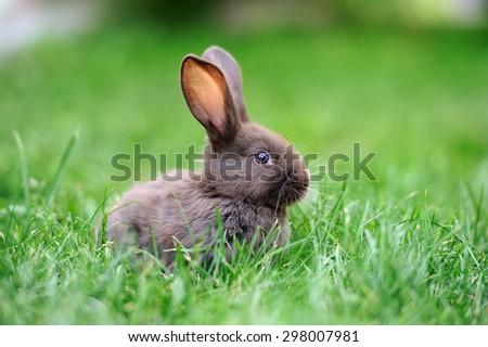 Little rabbit on green grass in summer day - stock photo