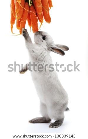 Little rabbit on white - stock photo