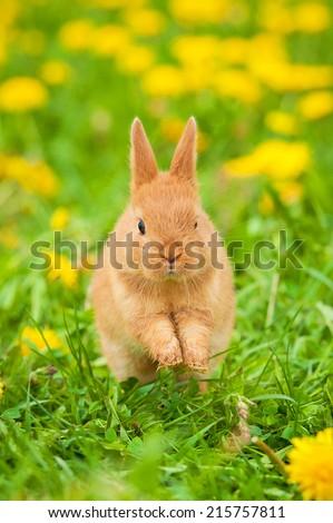 Little rabbit running in flowers outdoors - stock photo