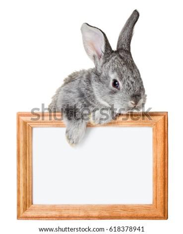 Little Rabbit Frame Isolated On White Stock Photo (Royalty Free ...