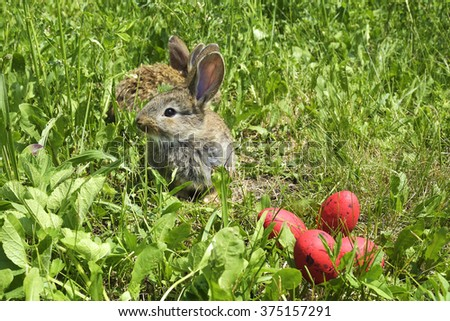 little rabbits on a pasture and red eggs