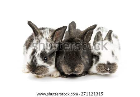 little rabbits on a white background  - stock photo