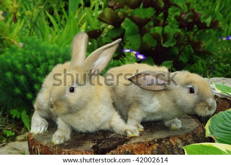 Little rabbits sitting on the stump in garden - stock photo
