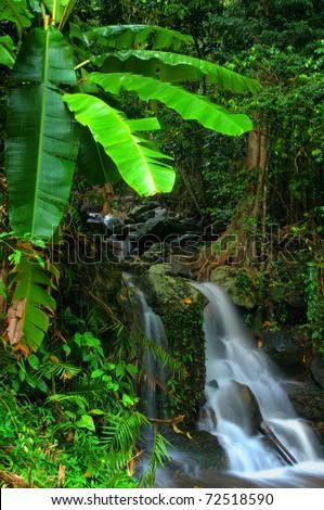 little rainforest waterfall near Cairns, Queensland, Australia - stock photo