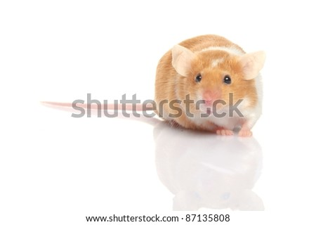 little red and white mouse isolated on white background - stock photo